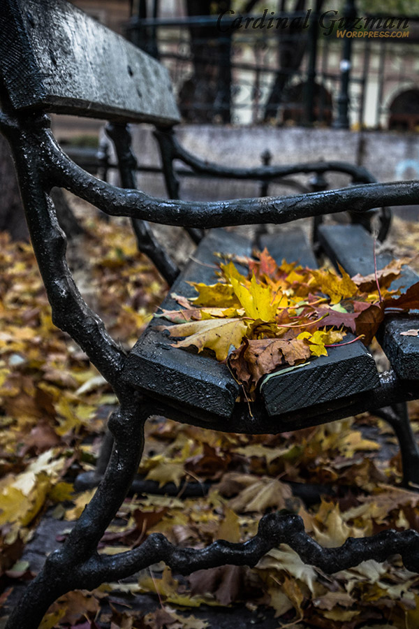 autumn_5986