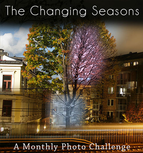 The Changing Seasons - a monthly photo challenge