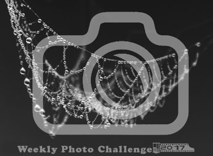 Weekly Photo Challenges